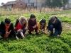 farm-visit-shanghai-6