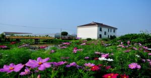 Organic Farm Scene