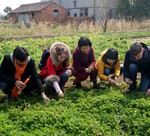 Rice Paddy Visit Group
