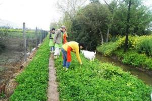 chongming farm 1