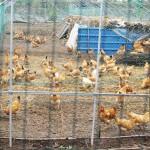 chongming farm 3