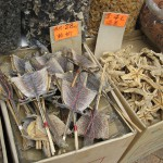 Dried lizard and starfish