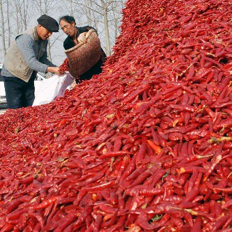 Hot Pepper Pile